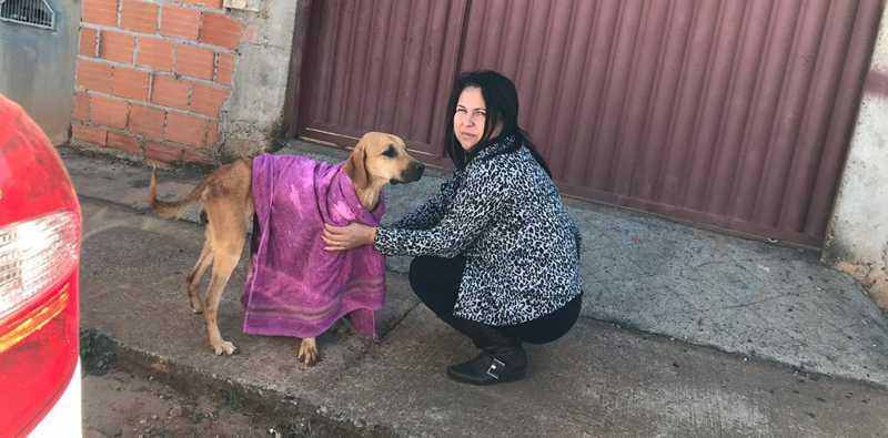 Cadela Luna resgatada no Bairro Pequis em Uberlândia — Foto: SOS Pet/Divulgação