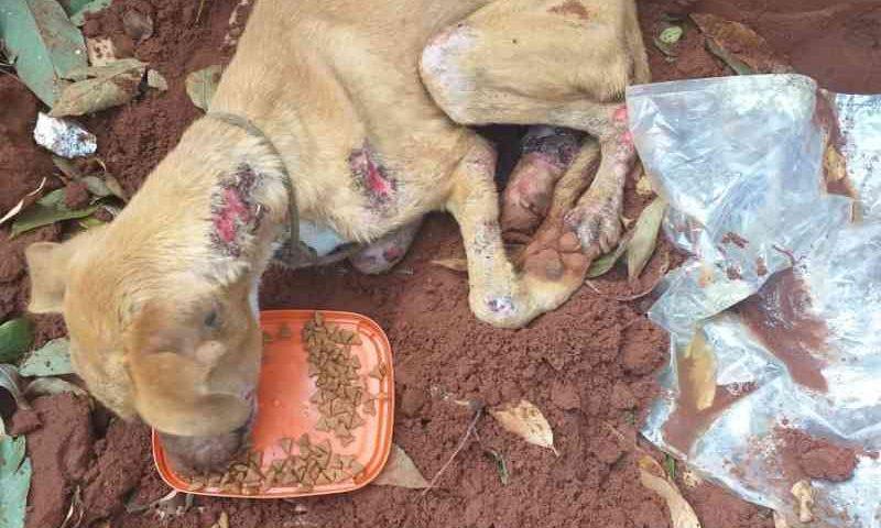 Vídeo: homem resgata animal mutilado, pede ajuda e busca um lar para Hércules