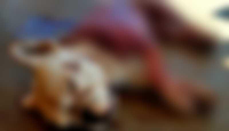 Jovem chega em casa embriagado e mata cachorro com seis facadas em Campo Grande, MS