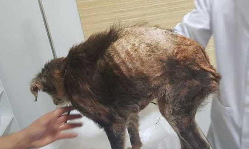 Animal foi resgatado e encaminhado para clínica veterinária - Foto: Divulgação