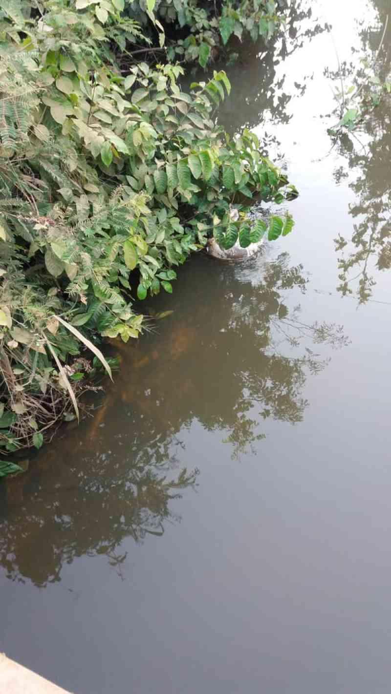 Mais de 20 cães são encontrados mortos às margens de estrada e dentro de rio que abastece Alta Floresta, MT
