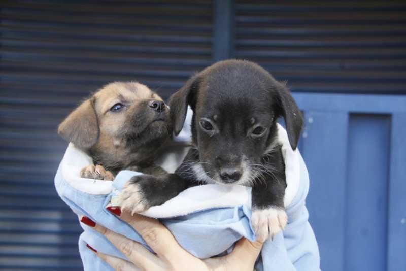 Animais são entregues já vermifugados, vacinados e castrados — Foto: Luiz Alves/Secom Cuiabá
