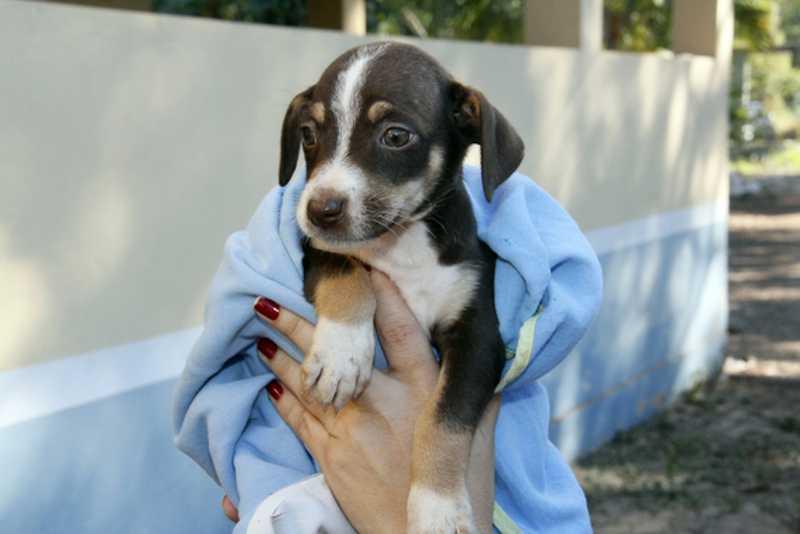 Animais estão disponíveis para adoção responsável — Foto: Luiz Alves/Secom Cuiabá