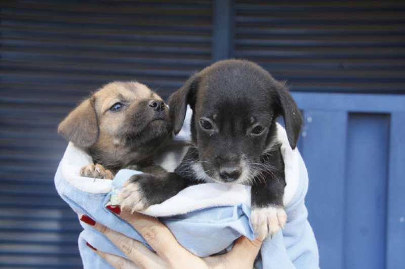 Diretoria de Bem-estar Animal de Cuiabá tem 14 filhotes e dois cachorros adultos disponíveis para adoção