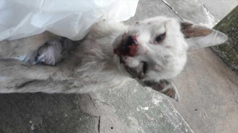 Animais envenenados foram encontrados na rua Baltazar Navarros, na área Central