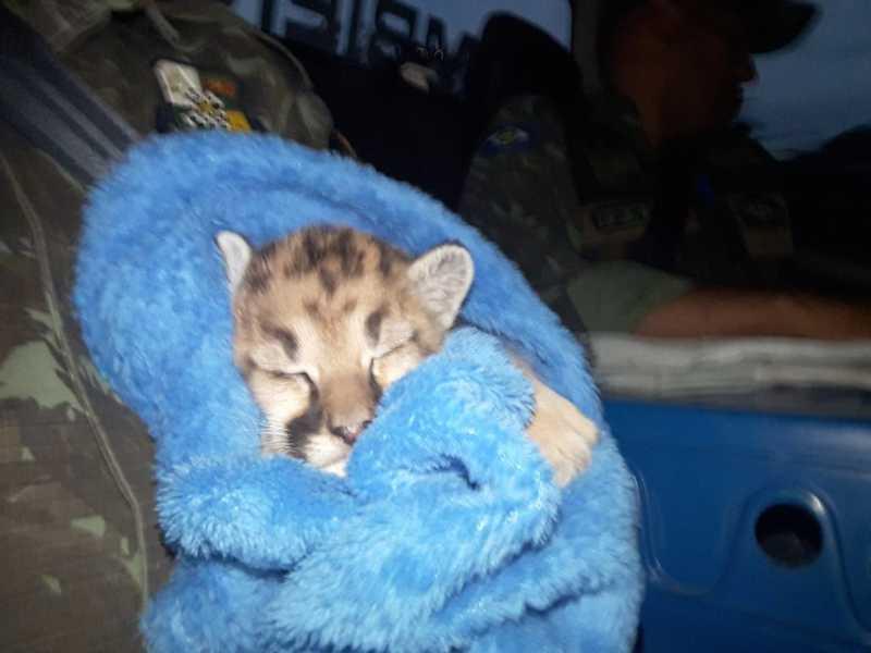 Filhote foi encontrado em região de lavoura em Jaciara (MT) — Foto: Divulgação