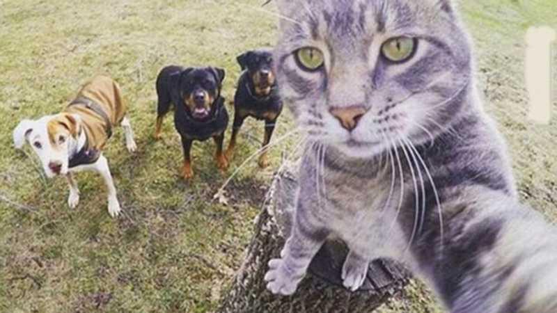 Prefeitura de Nova Xavantina (MT) inicia campanha de castração de animais domésticos e orienta população