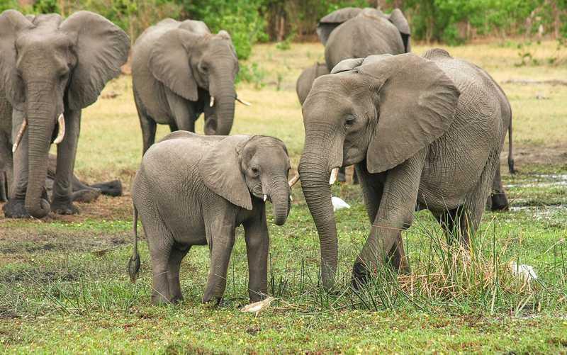 Ministério do Meio Ambiente e do Turismo diz que elefante invadia propriedades de agricultores — Foto: designerpoint/Creative Commons