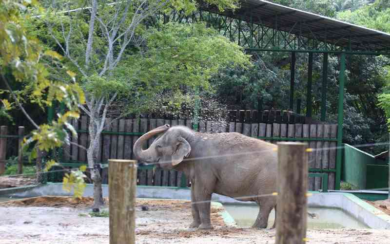 Direção da Bica nega maus-tratos à elefanta Lady, em João Pessoa, PB