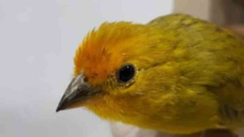 MPF – FPI: apreensão de aves e prisão em flagrante em Jatobá, PE