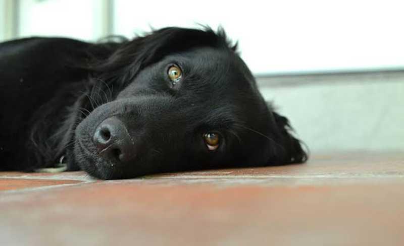 Bezerros (PE) tem aumento do crime ambiental no envenenamento de cães e gatos