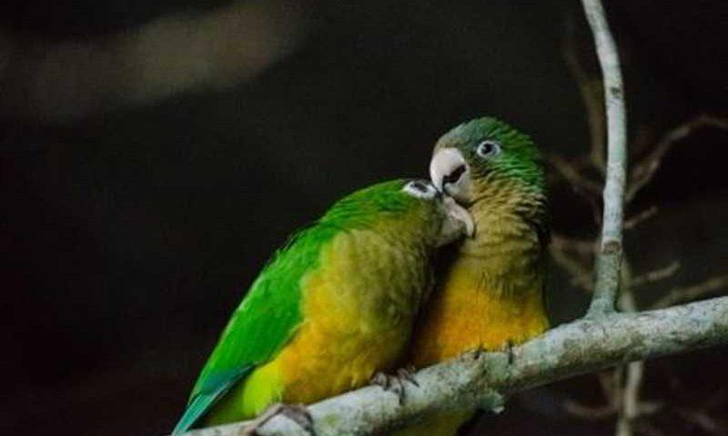 Aves serão devolvidas à natureza. Foto: Lu Rocha/Semas-PE