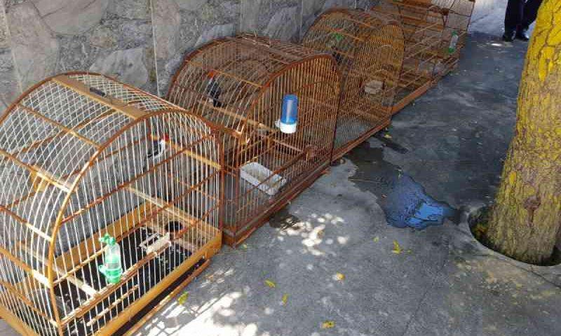 Polícia Ambiental apreende 23 pássaros silvestres em gaiolas na zona sul de Teresina, PI