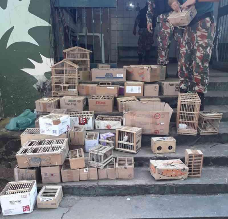 Polícia resgata 127 pássaros silvestres que eram vendidos ilegalmente no Centro de Teresina, PI