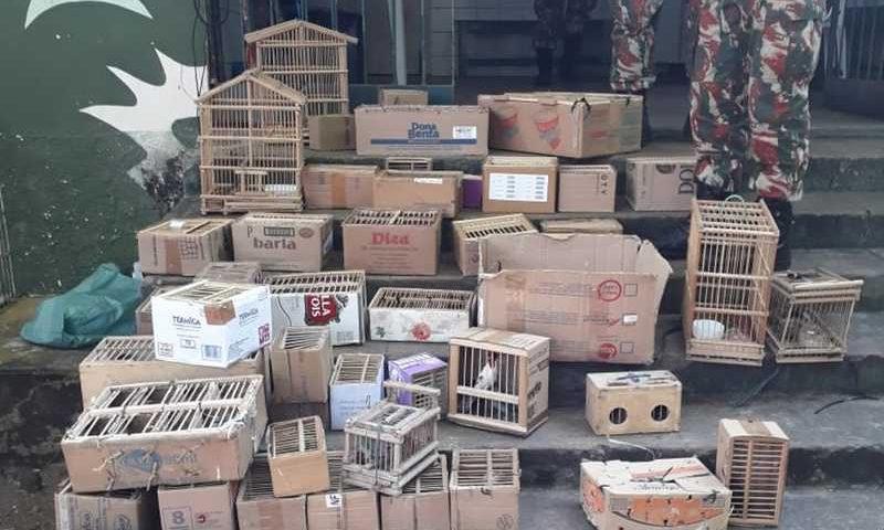 Pássaros eram vendidos em gaiolas de papelão no Centro de Teresina - Piauí — Foto: Polícia Militar