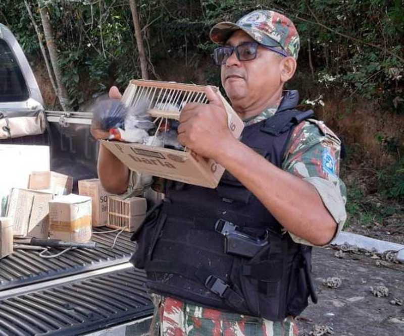 Policial do Batalhão de Policiamento Ambiental liberta pássaro após resgate de feira ilegal no Centro de Teresina — Foto: Polícia Militar