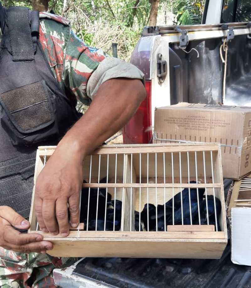 Animais eram mantidos em pequenas gaiolas em feira no Centro de Teresina - Piauí — Foto: Polícia Militar
