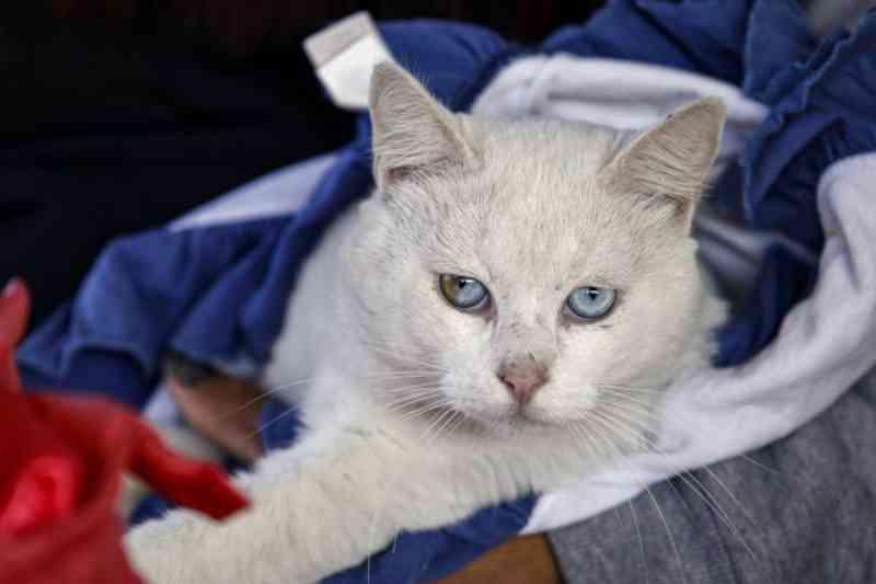Prefeitura de Araucária (PR) abre 480 vagas para castração de animais no Jardim Industrial