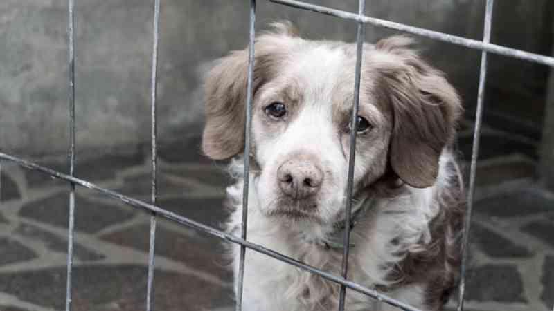 Denúncias de maus-tratos a animais crescem 48,7% em Maringá, PR
