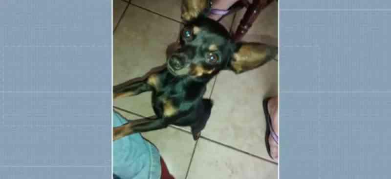 Mulher é condenada a pagar multa de R$ 25 mil por morte de cachorro em Maringá, PR