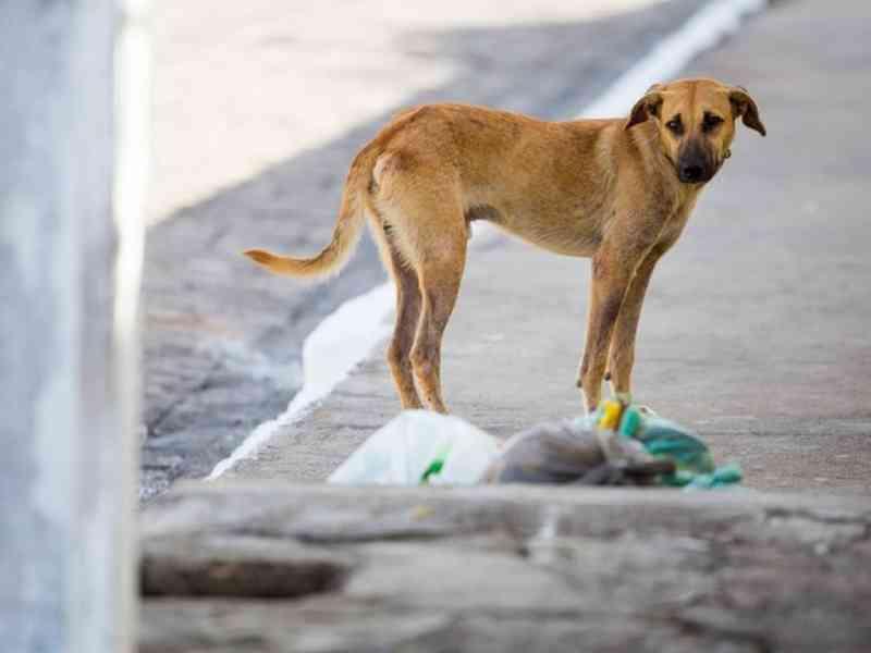 Prefeitura de Quinta do Sol (PR) dará 50% de desconto no IPTU a morador que adotar animal
