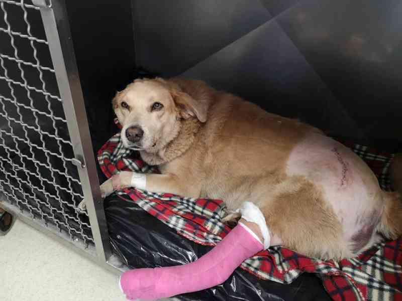 Portugal: Bombeiros angariam donativos para salvar cadela atropelada