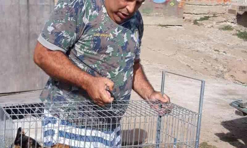 Protetores resgatam gatinhos do pesqueiro de Arraial do Cabo, RJ, após mortes por envenenamento
