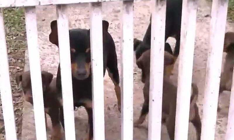 Cachorros são envenenados na CIC, em Curitiba, e moradores ficam extremamente assustados