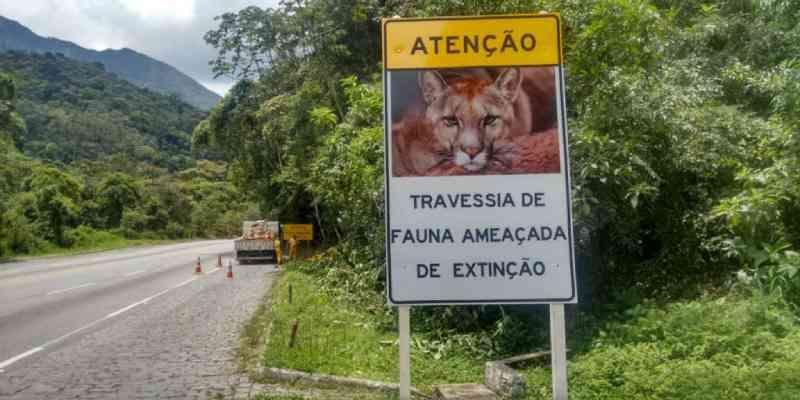 Época de acasalamento coloca a vida de animais em risco nas rodovias da Região Serrana, no RJ