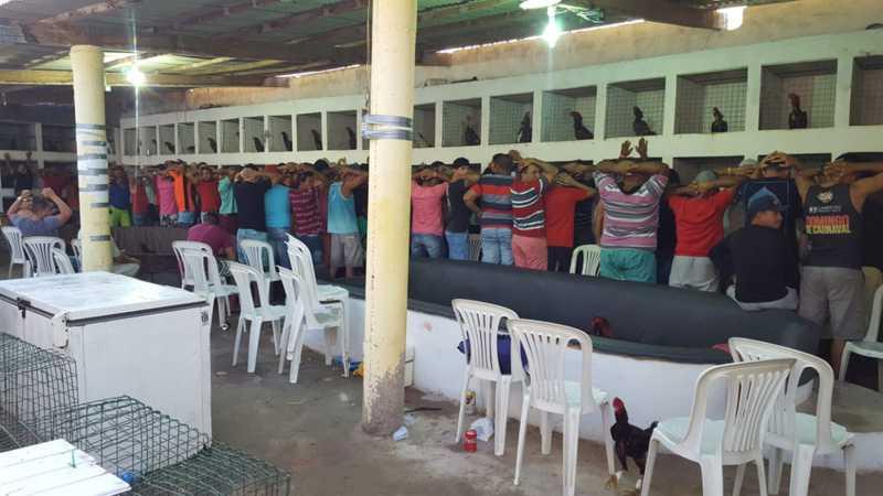 Mais de 90 pessoas foram detidas na rinha de galo fechada pela polícia em Macau, RN — Foto: Divulgação/PM