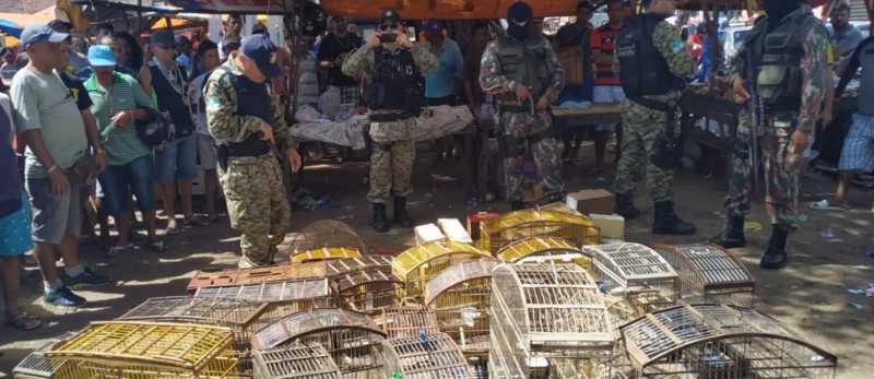 Ação da Guarda Municipal e Cipam resgata aves silvestres / Divulgação/SEMDES/GMN