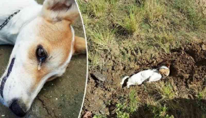 PC é acionada após dezenas de cães e gatos morrerem envenenados em Cerejeiras, RO