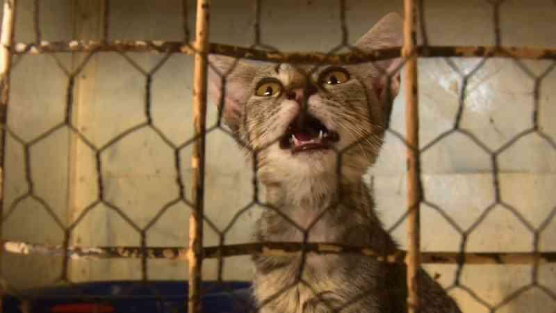 Grupo se une para resgatar animais das ruas de Cacoal, RO, e cria associação