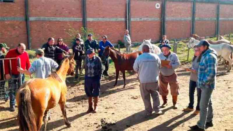 16 cavalos que sofriam maus-tratos foram adotados em Pelotas, RS