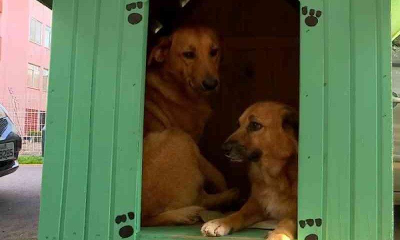 Justiça suspende remoção de casinhas de cachorro determinada pela Prefeitura de Porto Alegre, RS