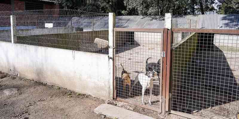 Prefeitura de Porto Alegre (RS) abre consulta pública sobre ampliação de proteção animal