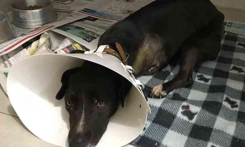 Cachorrinha é agredida durante furto a residência em Teutônia; polícia investiga