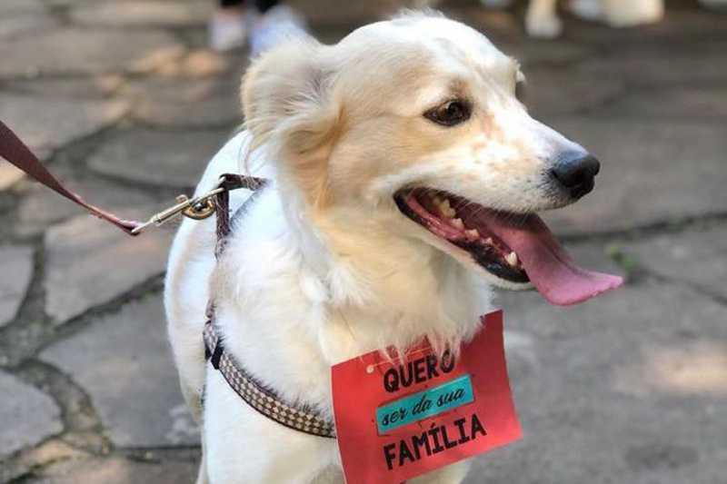 Dívidas superiores a R$ 10 mil levaram a entidade a cancelar o socorro de cães e gatos. Comunidade pode ajudar de diversas formas