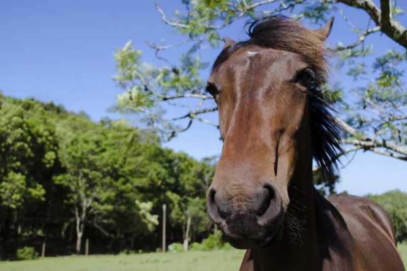 ONG Cavalo de Lata, que resgata equinos, é uma das beneficiadas com novos aportes