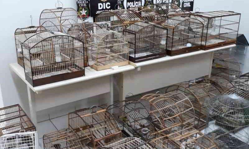 Homem é preso e 47 aves silvestres são apreendidas em Joinville, SC