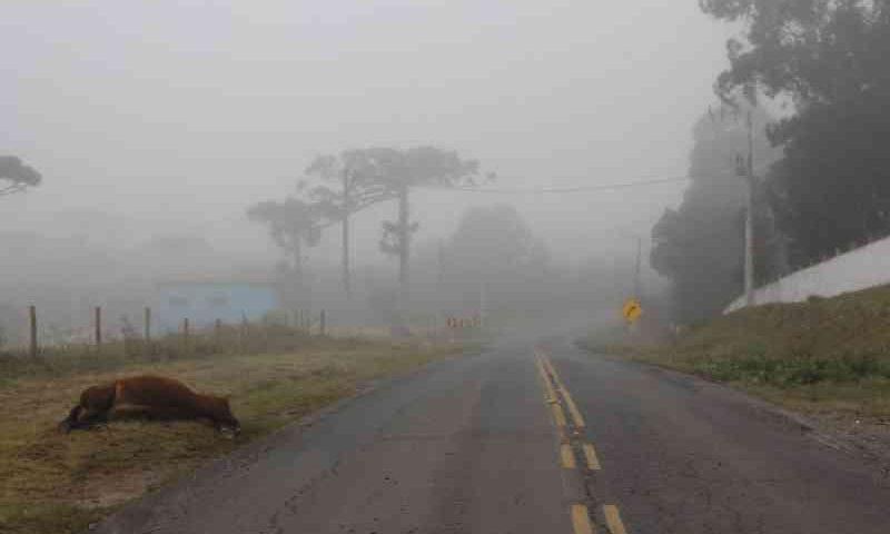 Égua morre após acidente na Avenida Victor Alves de Brito, em Lages, SC