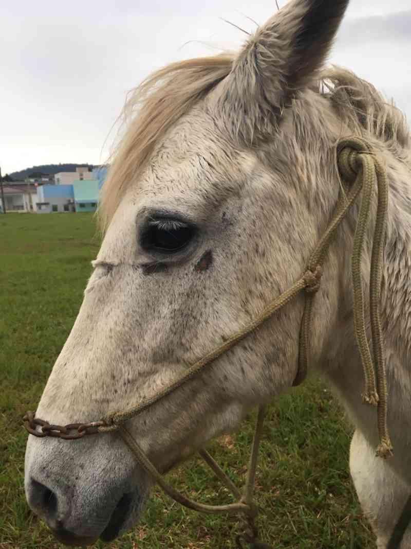 Faunamiga e PM resgatam égua que sofria supostos maus-tratos em Ouro, SC