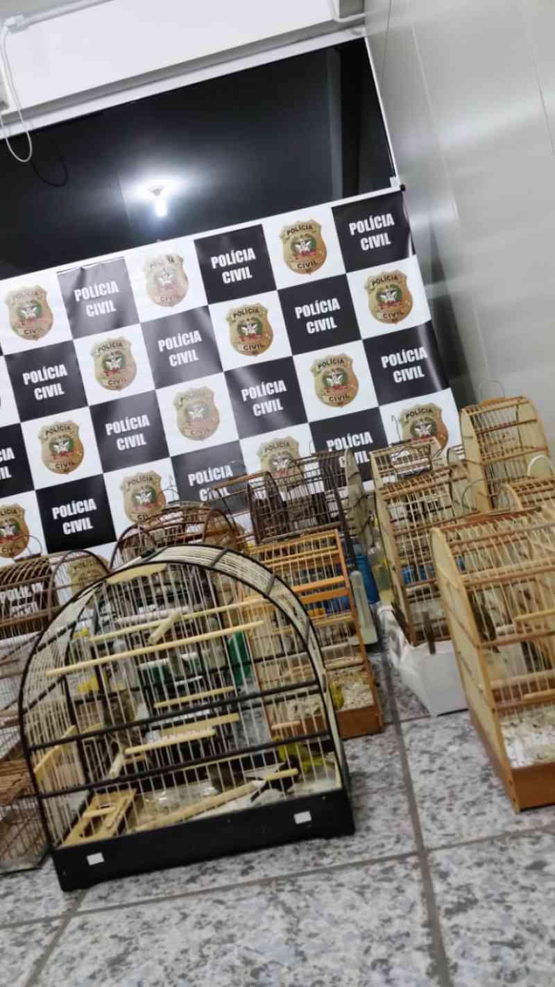 Pássaros são apreendidos pela Polícia Civil em Tubarão, SC