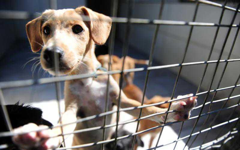 ONG que abriga 600 animais em Balneário Camboriú (SC) tem materiais de manutenção furtados