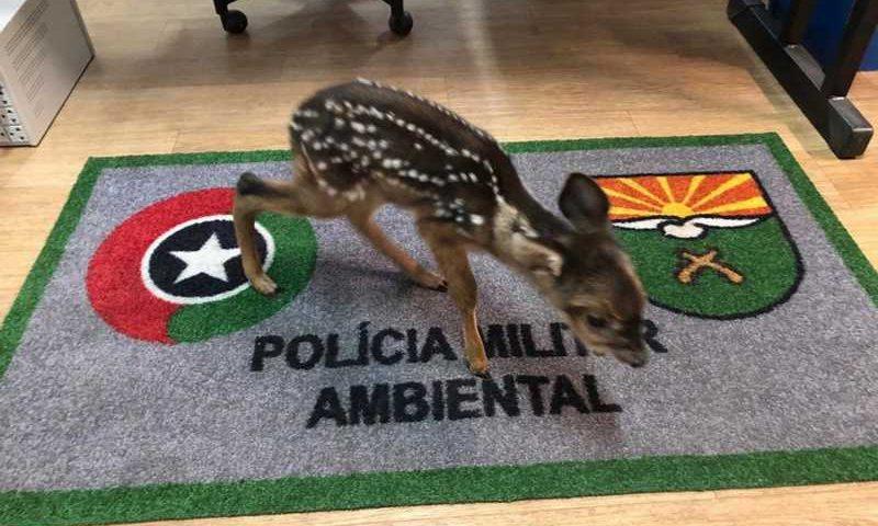 Filhote foi resgatado após mãe ter sido morta — Foto: Polícia Militar Ambiental/Divulgação