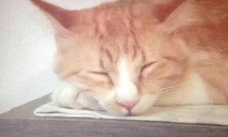 Gato terá guarda compartilhada após separação de casal em SC, decide Justiça
