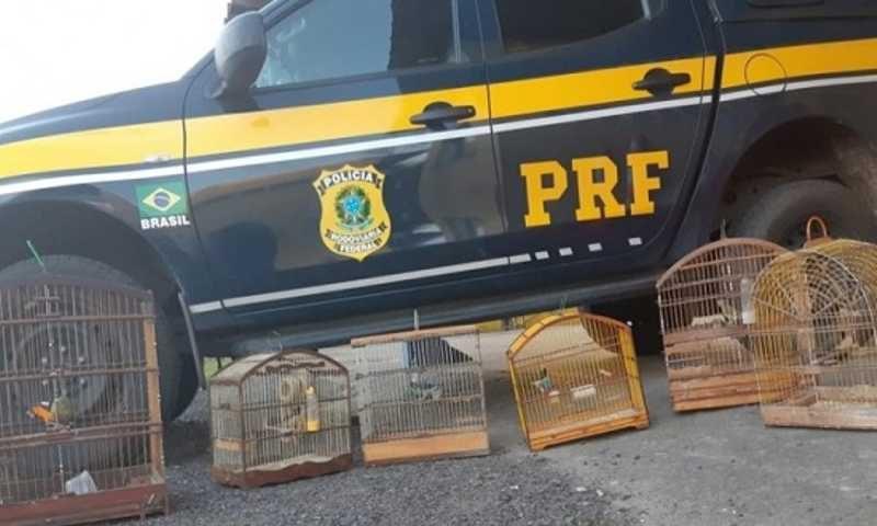 O responsável pelos animais foi identificado pela Polícia Rodoviária Federal. (Foto: PRF)