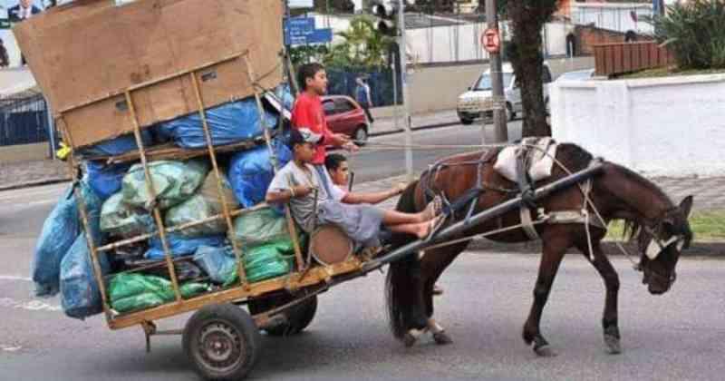 Vereadores devem aprovar fim do uso de animais em carroças em Americana, SP
