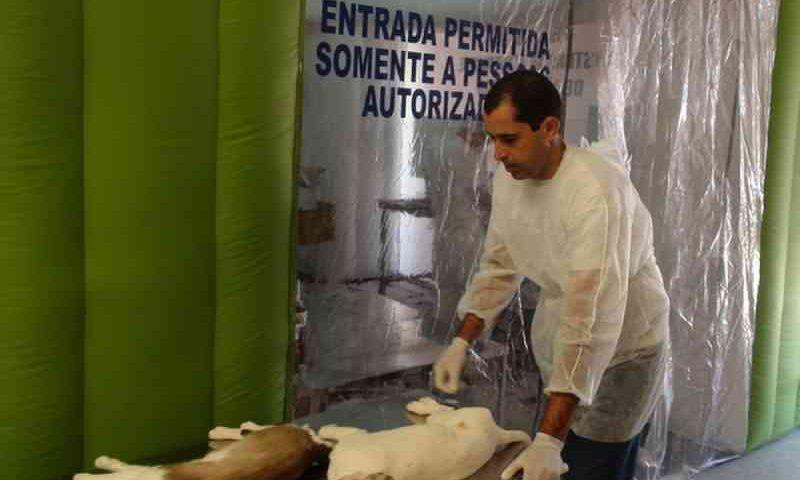 Pedidos de castração de animais passam a ser feitos em unidades de saúde de Piracicaba, SP