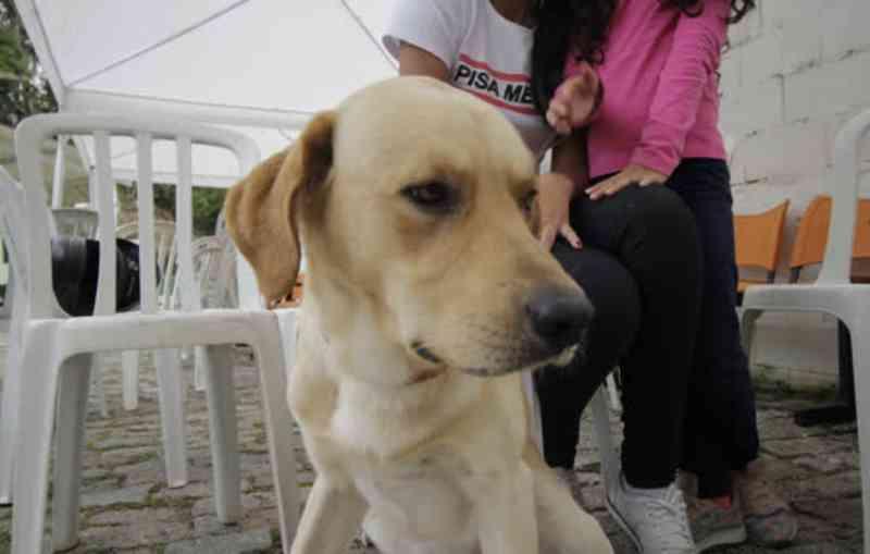Ribeirão Pires (SP) já realizou 1.500 castrações gratuitas de cães e gatos